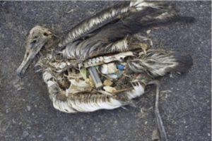 Danni Plastica sulla natura