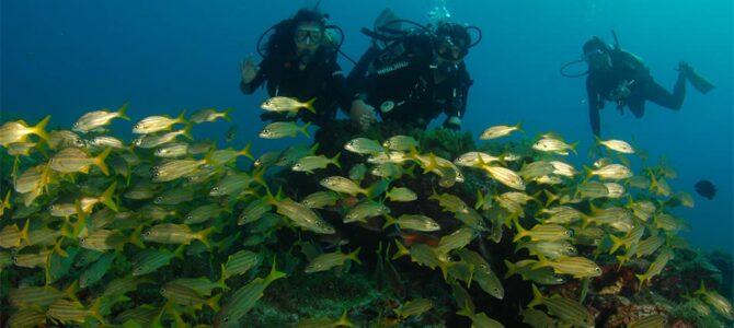 Viaggi per subacquei: cosa sapere, e fare, prima di partire
